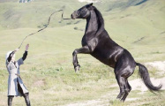 Le cheval karabakh: Un long chemin pour trouver le bon cheval - PHOTOS